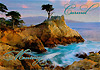 The Lone Cypress Tree  Postcard, 4 L x 6 W