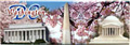 Washington, D.C. Souvenir Cherry Blossom Panoramic Magnet, 4-5/8L